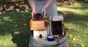 Stingless Bee Hive Transfer